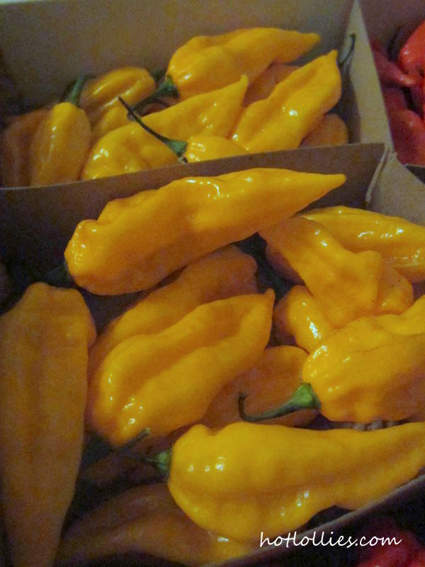 fatalii-peppers2