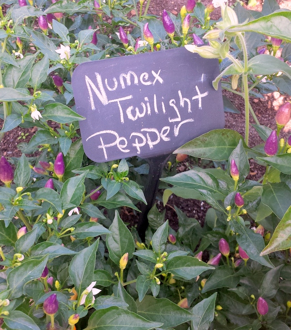 twilight-peppers